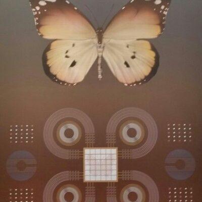 david-haiden-butterfly-01