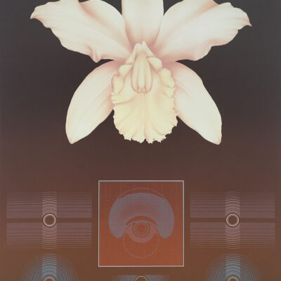 haiden-david-orchid-matrix-I-01